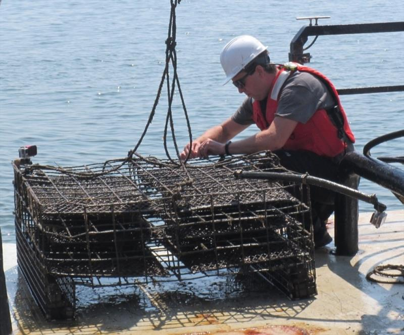 GoPro camera being mounted on oyster cage to record activity. - photo © NOAA Fisheries