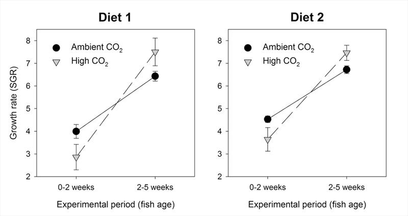 Growth rates of larval Pacific cod during first 5 weeks of life reared on 2 diets at ambient & elevated CO2 levels. Figure is redrawn from data presented in Hurst et al. 2019. Elevated CO2 alters behavior, growth, & lipid composition of Pacific cod larvae - photo © Marine Environmental Research