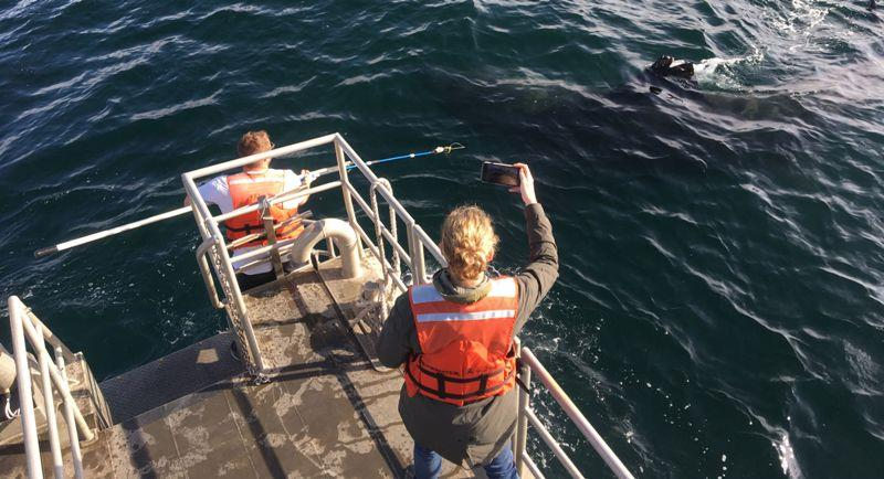 Researcher Ryan Freedman prepares to tag a basking shark. - photo © Pike Spector / NOAA