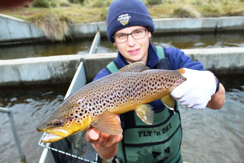 Josef with a fine male brownie photo copyright Carl Hyland taken at