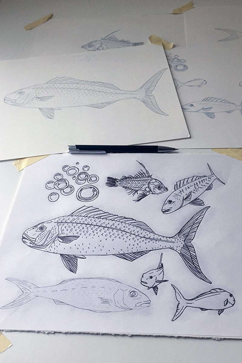 Early sketches scientific illustrator Rachel Strader used to develop the final EFH poster. - photo © Rachel Strader