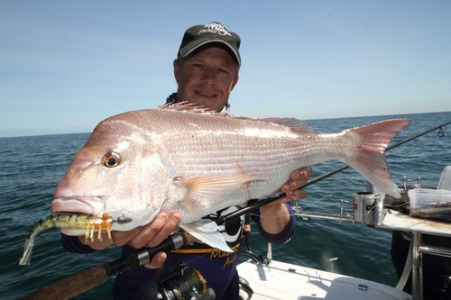 Soft plastics are also very effecitve on snapper. © Jarrod Day