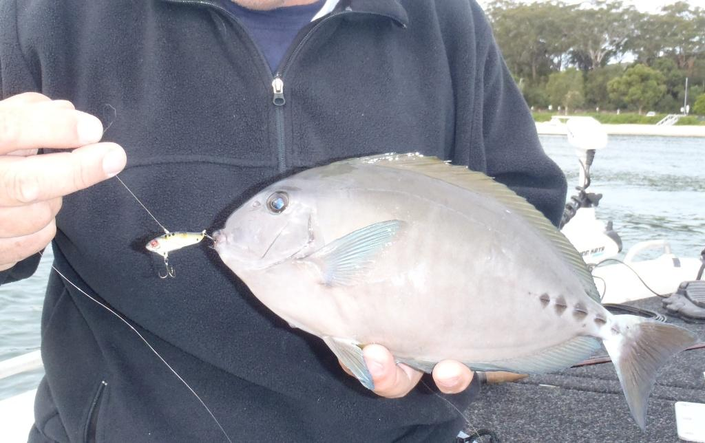What strange fish species have you caught on artificials?