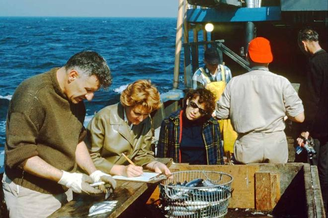 Dr. Robert Edwards separates species aboard the NOAA Ship Albatross IV circa 1960s © NOAA Fisheries