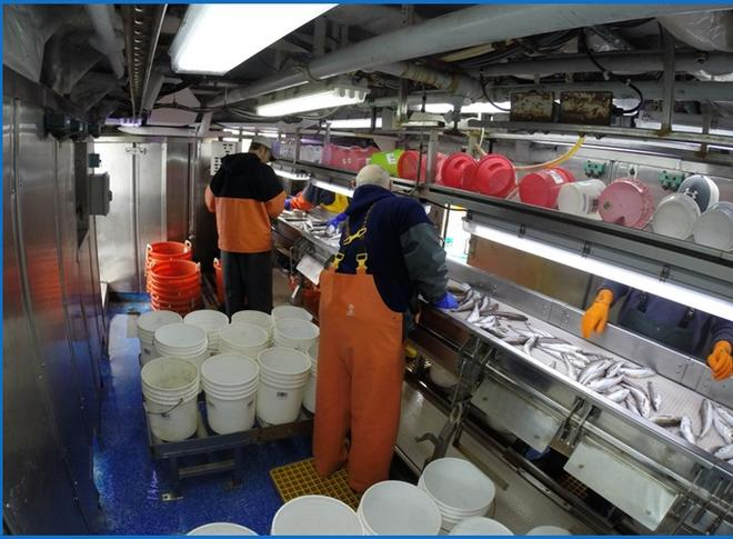 "From ""Smart Labs"" to magnetic measurements, moving fisheries data collection forward © NOAA Fisheries"